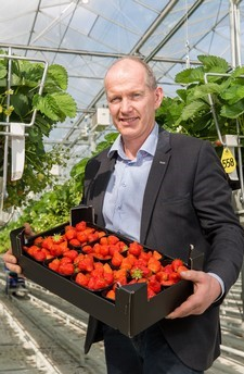 Marcel Dings van Brookberries