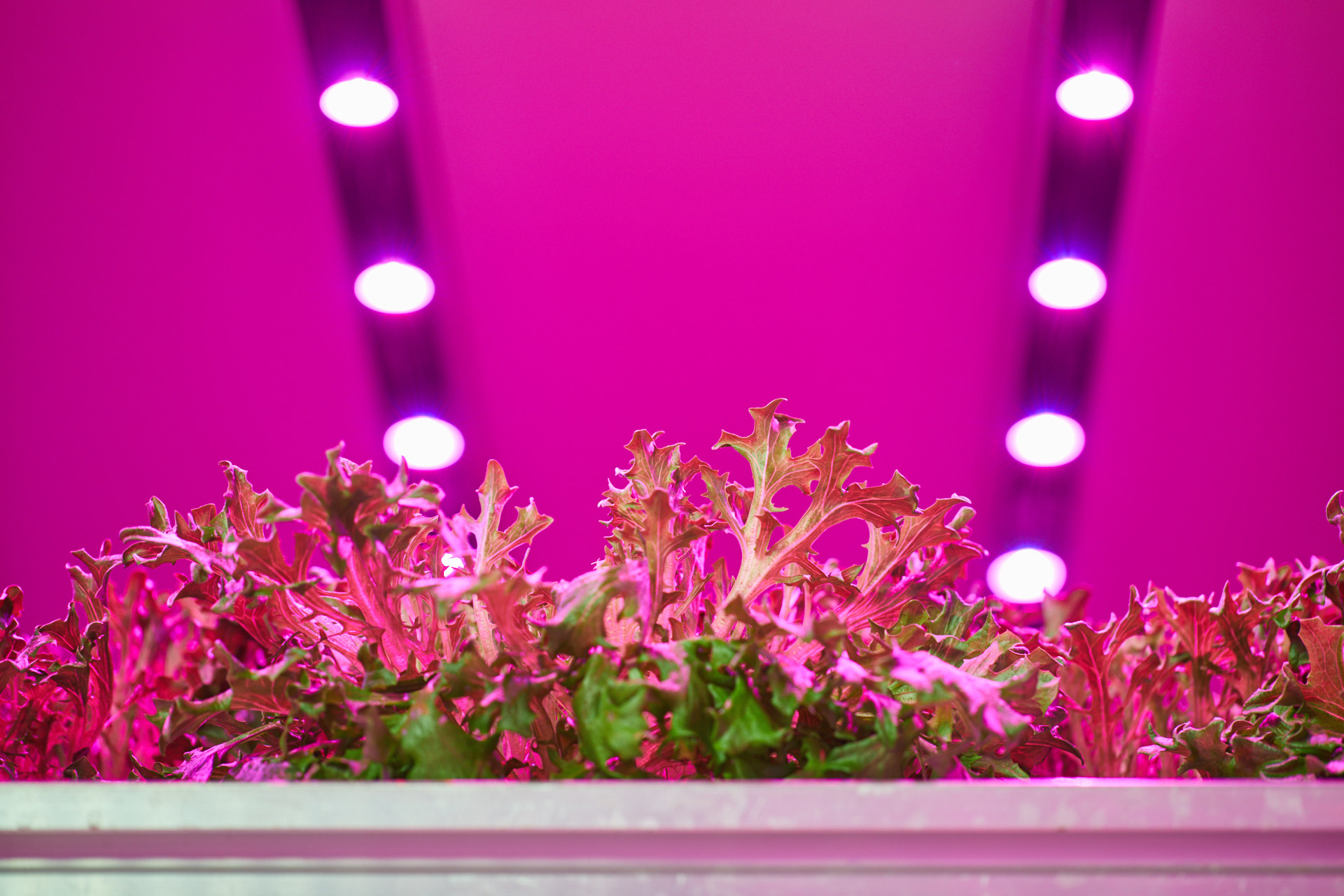 Vertical farming sla met LED