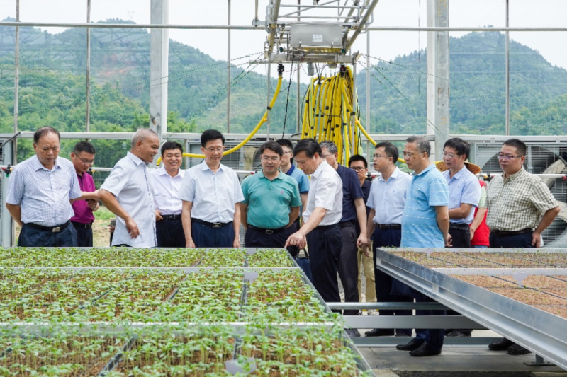 Groups of leaders and researchers from all over Guangxi visit the high-tech seedling production facility on a daily base.